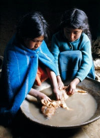 """Most nations have laws that prohibit child labor. Yet throughout the world, children in large numbers can be seen toiling in sweatshops, hauling concrete, tilling fields, plucking garbage or peddling shoes. The International Labor Organization estimates that 80 per cent of the world's working children are classified """"unpaid family workers"""". Two young Bolivian girls give a piglet a bath before dressing him for dinner- Photo ID 149384. 01/01/1978. La Paz, Bolivia. UN Photo/Jean Pierre Laffont via flickrCC"""